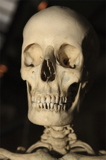 Se vendieron huesos humanos en eBay la tienda de paco